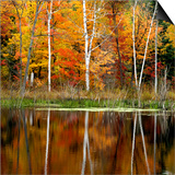 Autumn Colour Reflected in a Beaver Pond, Point Au Baril, Ontario, Canada. Prints by Don Johnston
