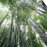 Bamboo Forest Prints by Micha Pawlitzki