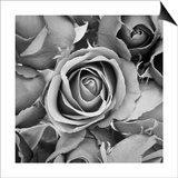 Sorrow Rose Prints by  zirconicusso