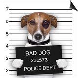 Mugshot Dog Posters by Javier Brosch