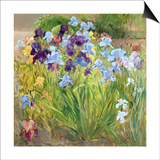 The Iris Bed, Bedfield, 1996 Prints by Timothy Easton