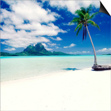 Palm Tree on a Tropical Beach Posters