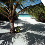 Palm Tree on Sandy Beach Posters