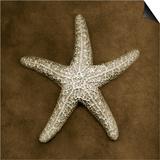 Sugar Starfish Poster by John Kuss