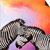 Two Zebras On The Sky Posters by  yuran-78