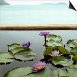 Water lilies in pond by ocean Posters