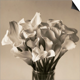 Calla Lilies in Vase Posters by Ann Cutting