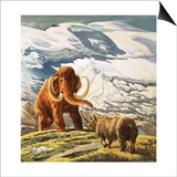Mammoth Meets Rhinocerous Prints by  Tansley