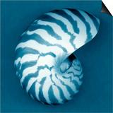 Nautilus Shell Posters by John Kuss