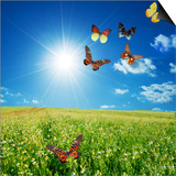 Butterfly Spring Field. A Group O Colorful Butterflies In The Spring Summer Grass Land Posters by PHOTOCREO Michal Bednarek