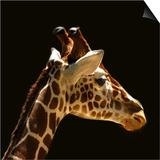 Giraffe Art by  yuran-78