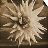 Dahlia with Clouds Behind Poster by Tom Marks
