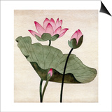 Lotus Blossom - 1 Posters by Robert McIntosh
