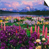 Iris and Lupine Garden and Teton Range at Oxbow Bend, Wyoming, USA Prints by Adam Jones