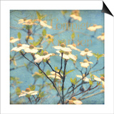 Dogwood I - Blossoming Tree Prints by Amy Melious