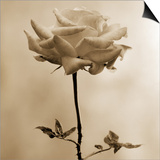 Long-Stemmed Rose Print by Tom Marks