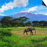 A Lone African Elephant (Loxodonta Africana) by Mt. Kilimanjaro, Amboseli Nat'l Park, Kenya Prints by Miva Stock