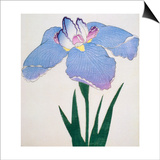 Kaku Jaku Ro Book of a Blue Iris Print by  Stapleton Collection
