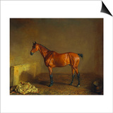A Portrait of 'Marshall' a Bay Racehorse, in a Stall Prints by Edward Troye