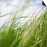 Sea Grasses 1 Posters by Paul Edmondson