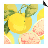 Fresh Grapefruits Print by Martha Negley