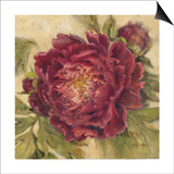 Scarlet Peony Print by Kathryn White