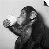 A Chimp Drinking a Cup of Tea Art
