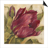 Scarlet Tulip Prints by Kathryn White