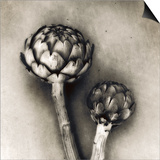 Artichoke Prints by Jamie Cook