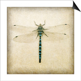 Dragonfly I Posters by Amy Melious