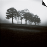Fog Tree Study 2 Poster by Jamie Cook
