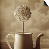 Blooming Allium in Old Metal Coffee Pot Posters by Tom Marks