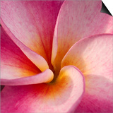 Detail of Plumeria at Molokai Plumerias, Molokai, Hawaii, USA Posters by Bruce Behnke