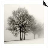 Winter Grove Prints by Ilona Wellman