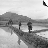 US Marines Move Along Rice Paddy Dikes in Pursuit of Viet Cong, Dec. 1965 Prints
