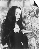 Carolyn Jones - The Addams Family Prints