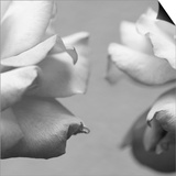 Rose Petals I Prints by Nicole Katano