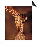 Giraffe Posters by Karl Amman
