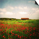Red Field Print by Philippe Sainte-Laudy
