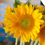Sunny Sunflower I Prints by Nicole Katano