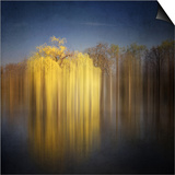 Weeping Willow Prints by Philippe Sainte-Laudy