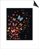 Midnight Butterflies Prints by Lily Greenwood