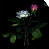 Sherry Parfait and White Prints by Magda Indigo