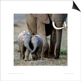 Inseparable Friends Prints by Anup & Manoj Shah