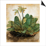 DRer: Tuft Of Cowslips Prints by Albrecht Dürer