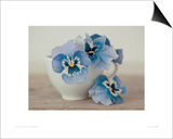 Pansies Prints by Ian Winstanley