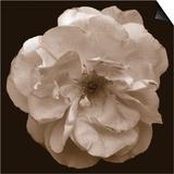 Rose - Sepia Print by Katano Nicole