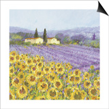 Lavender and Sunflowers, Provence Poster by Hazel Barker