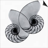 X-Ray of Nautilus Shells Posters by George Taylor