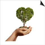 Woman's Hands Holding Soil with a Tree Heart Shaped Prints
